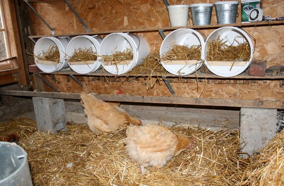 Chicken Coop Roosting Ideas