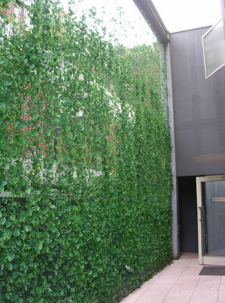 Nature Plant Outdoor Privacy Screen