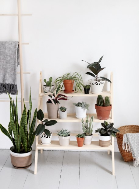 The Exclusive Ladder Plant Stand