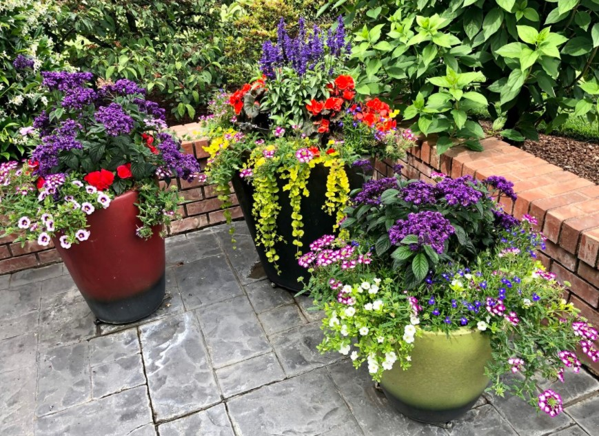 Perk Up the Space with Plants