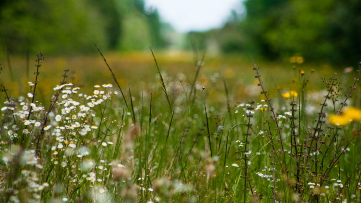 Digging Deep: Are All Garden Weeds Really That Bad…